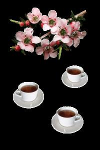 Séance Reiki autour d'un thé 1