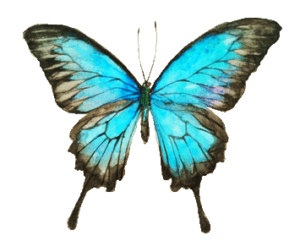 Papillon-bleu-ciel 3
