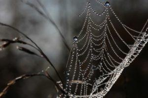 Perles-de-pluie 3