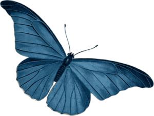 blue_butterfly 3
