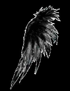 Aile d'aigle 1