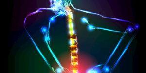 Colonne vertébrale 1