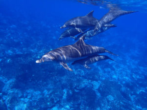 Dauphins 3