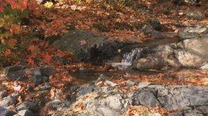 Eau dans l'automne 1