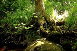 Habitat-des-Elfes-Forêt-de-brocéliande 3 3