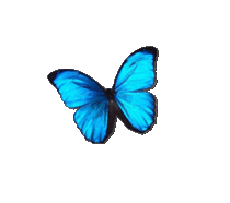 Papillon-turquoide-1 3