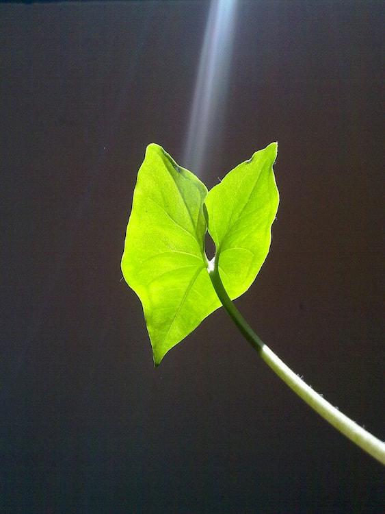 Le rayon vert de dégagement 1