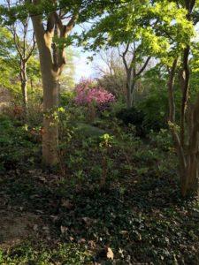 Reliance à la Terre Mère en sous bois 1